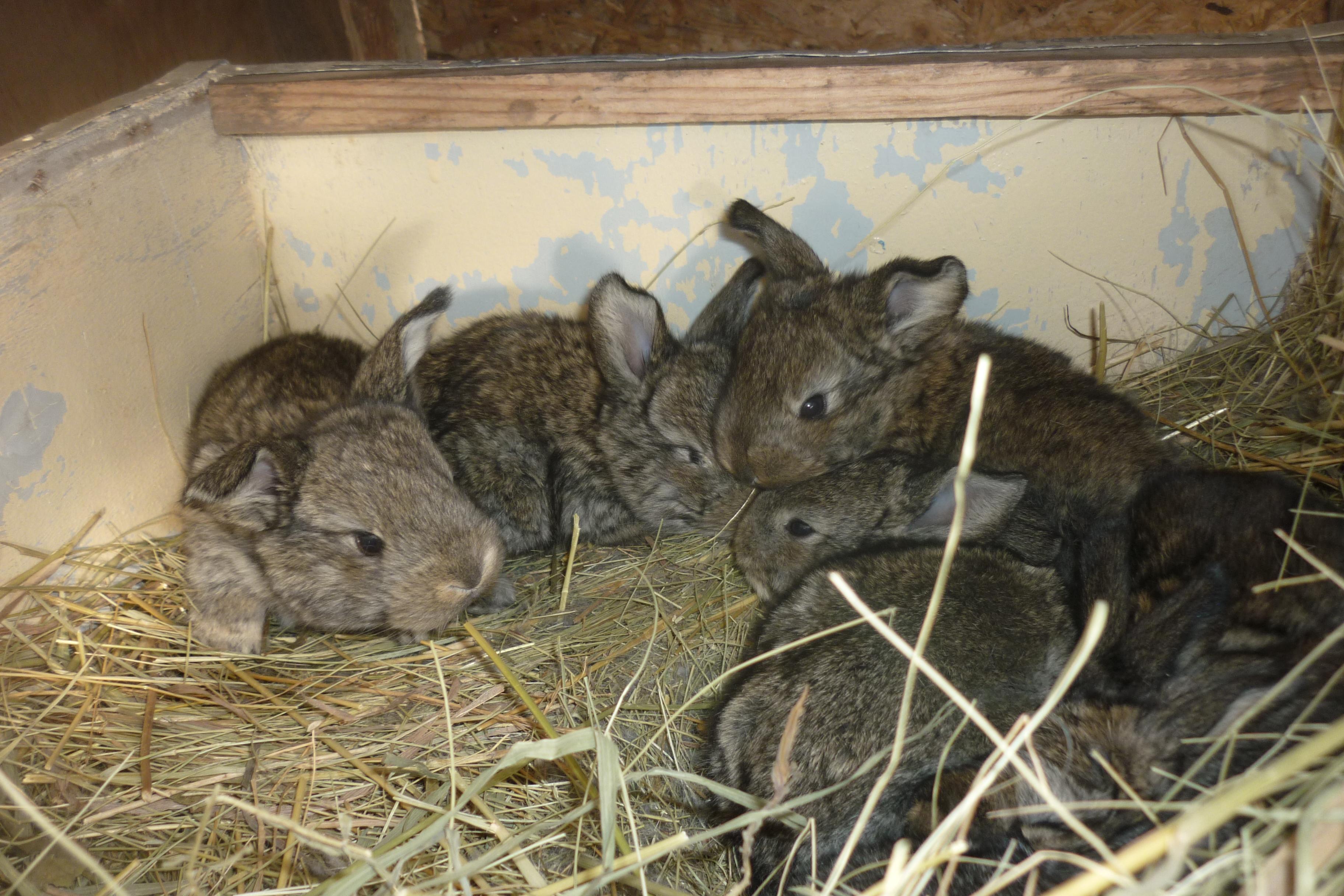 Кролики? Хорошие домашние животные для детей?