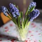 Цветам продлят жизнь правильная срезка и обработка