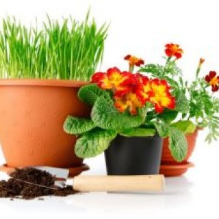 rp_за_домашними_растениями.jpg